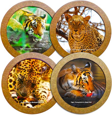 Hot Muggs Wild Focus Coasters - Wild Cats - set of 4